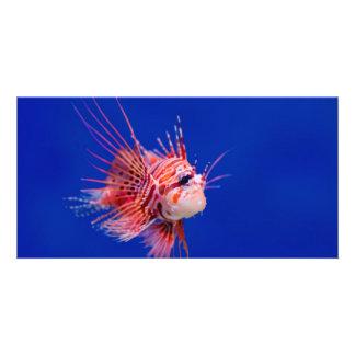Fire Fish Custom Photo Card