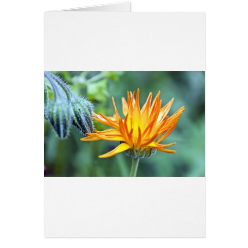 Fire Flower Greeting Cards