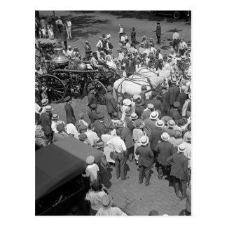 Fire Horses Retirement Party, 1925 Postcard