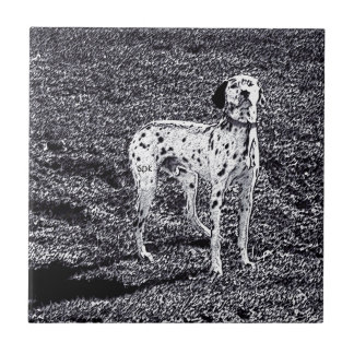 Fire House Dalmatian Dog in Black and White Ink Tile