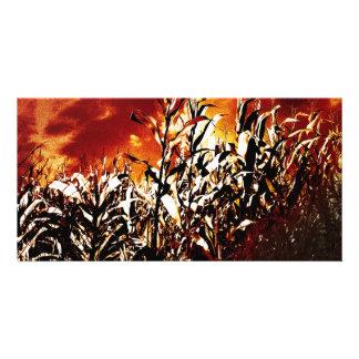 Fire in the corn field card
