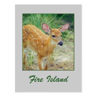 'Fire Island Fawn' Postcard