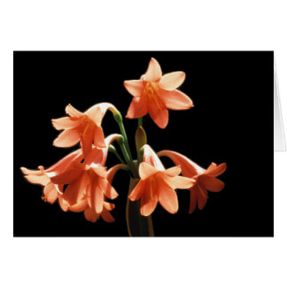 Fire Lily, a Cyrtanthus Hybrid Stationery Note Card
