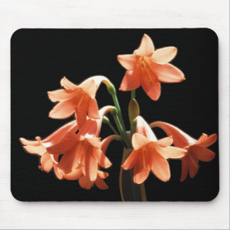 Fire Lily, a Cyrtanthus Hybrid Mouse Pads
