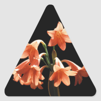 Fire Lily, a Cyrtanthus Hybrid Triangle Sticker