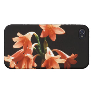 fire lily iPhone 4/4S cases