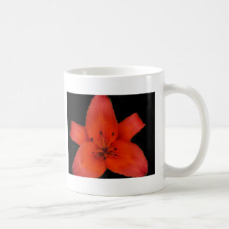 Fire Lily Sacred Star Mugs