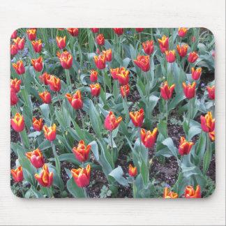 Fire Orange tulips Mouse Pad