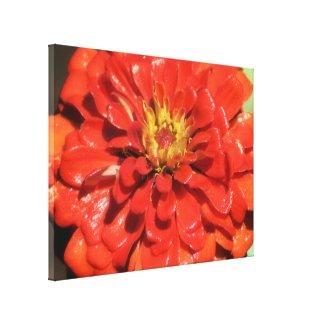 Fire & Rain Flower Photography Canvas Prints