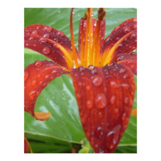 fire red and orange lily w/ dew letterhead