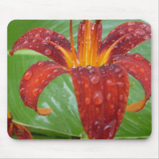 fire red and orange lily w/ dew mouse pad