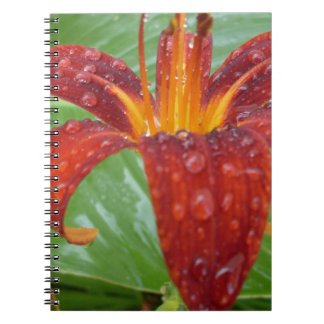 fire red and orange lily w/ dew note books