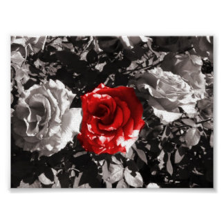 Fire red flower poster