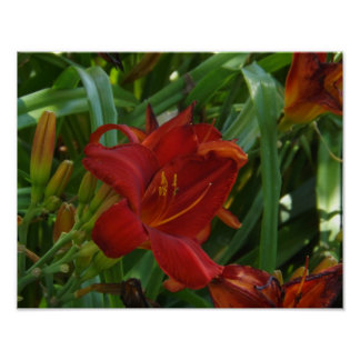 Fire Red Lily Print