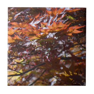 Fire Red Maple Tree Tile