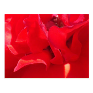 Fire Red Petals Postcard