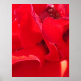Fire Red Petals Print