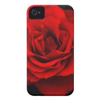 Fire Red Rose iPhone 4 4s Barely There Case iPhone 4 Case-Mate Cases