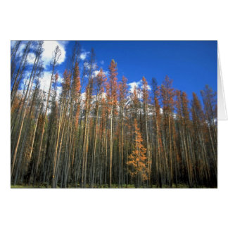 Fire scorched forest in Banff National Park, Alber Greeting Card