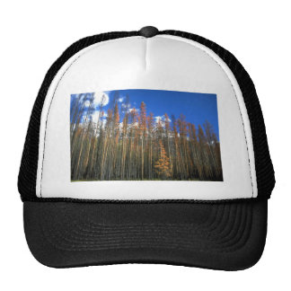 Fire scorched forest in Banff National Park, Alber Trucker Hat