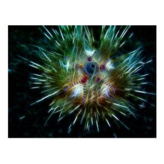 Fire Sea Urchin Postcard