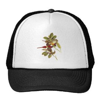 Fire-tailed Sunbird Hats