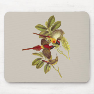 Fire-tailed Sunbird Mouse Pad