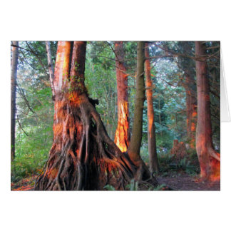 Fire Trees Cards