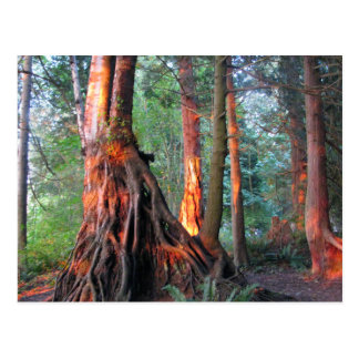 Fire Trees Post Card