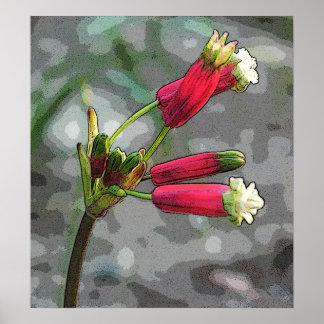 firecracker blooms poster