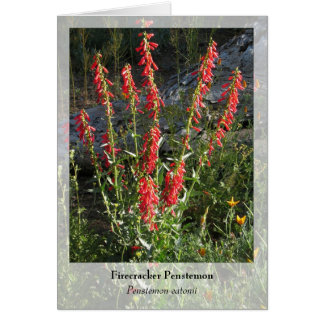 Firecracker Penstemon - Native Notecard Stationery Note Card