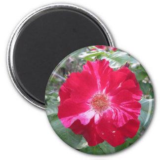 Firecracker Rose ~ Single Bloom Magnet