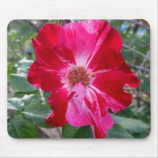 Firecracker Rose ~ Single Bloom Mouse Pad