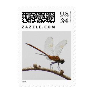 Firecracker Skimmer Dragonfly Postage Stamp