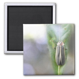 Firefly - Photuris Pyralis 2 Inch Square Magnet