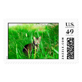 Firefox Feral Cat Oil Painting Postage
