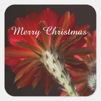 Firelight Cactus all around , Merry Christmas Square Sticker