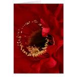 Firelight Cactus flower Card
