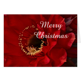 Firelight Cactus Merry Christmas Card