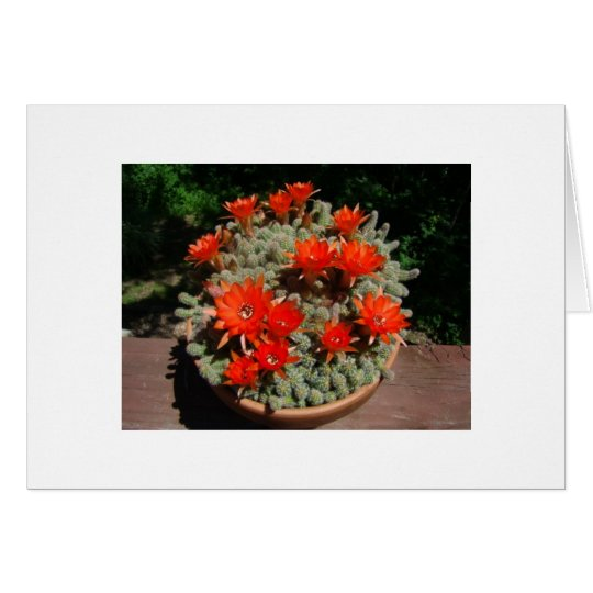 Firery Cactus Blooms Card
