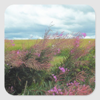 Fireweed 2 square sticker