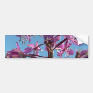 Fireweed Flower Purple Car Bumper Sticker