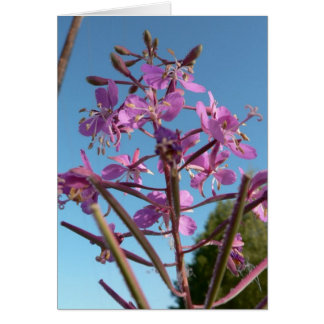 Fireweed Flower Purple Cards