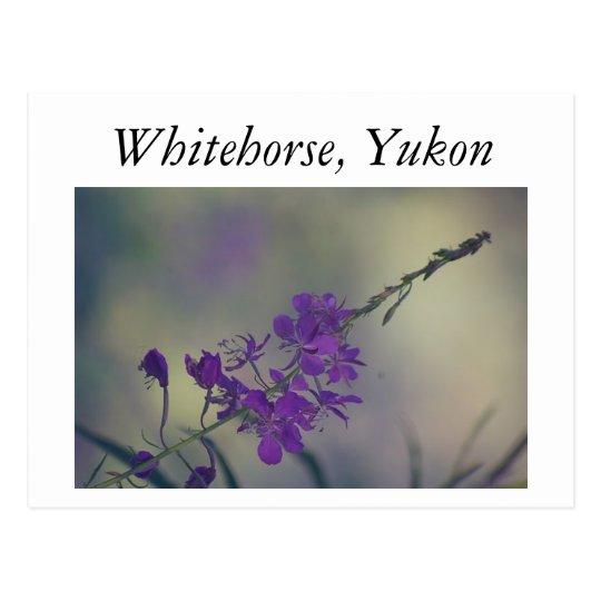Fireweed, Fox Lake, Whitehorse, Yukon Postcard