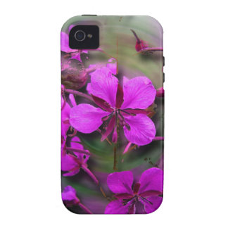 Fireweed in a Hurricane No Greeting Case-Mate iPhone 4 Cover