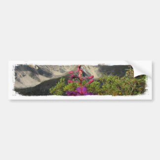 Fireweed in the Pelly Mountains Car Bumper Sticker