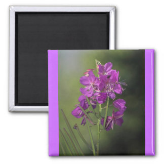 Fireweed Magnet