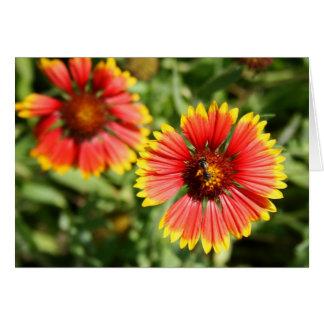 Firewheel - Sundance Wildflower Card