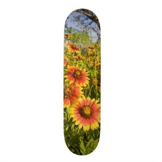 Firewheels Gaillardia pulchella) wildflowers Skateboard