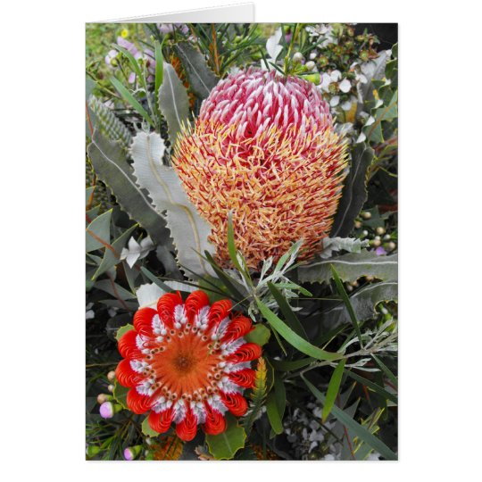 Firewood and Scarlet Banksia Card